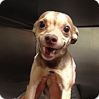 Adopt A Pet :: Cocoa - Rockaway, NJ