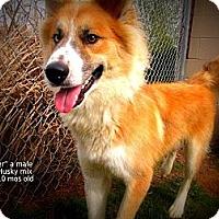 Adopt A Pet :: Trapper - Gadsden, AL