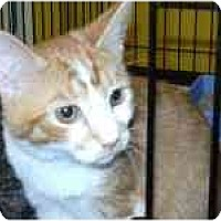 Adopt A Pet :: Denver - Arlington, VA