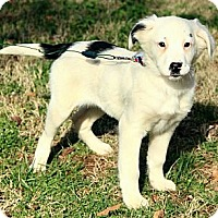 Adopt A Pet :: Lilly - Brattleboro, VT