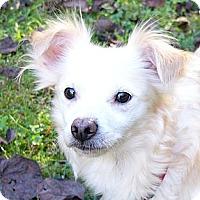 Adopt A Pet :: Tara - Mocksville, NC