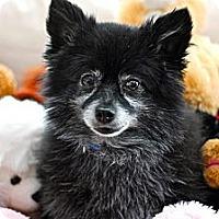 Adopt A Pet :: Chewbarka - Douglas, ON