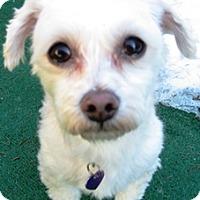 Adopt A Pet :: Kaelei - Dover, MA