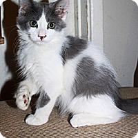 Adopt A Pet :: Hank - Phoenix, AZ