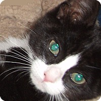 Adopt A Pet :: Sami-Adoption Pending! - Colmar, PA