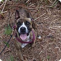 Adopt A Pet :: Kurby - Jupiter, FL