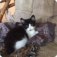 Adopt A Pet :: Alexandra - Delmont, PA