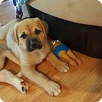 Adopt A Pet :: Nukka - Homewood, AL