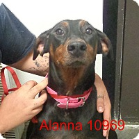 Adopt A Pet :: Alanna - baltimore, MD