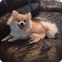 Adopt A Pet :: Bert - Edmonton, AB