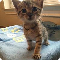 Adopt A Pet :: Wanda - Austin, TX