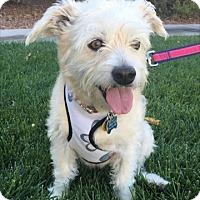 Adopt A Pet :: Doris Day (bonded pair) - Las Vegas, NV