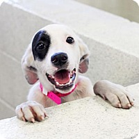 Adopt A Pet :: Jena - Atlanta, GA