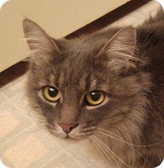 Domestic Longhair Cat for adoption in Midvale, Utah - Winnie