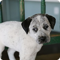 Adopt A Pet :: Winter - San Antonio, TX