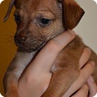 Adopt A Pet :: Louis - Arlington, WA