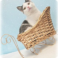 Adopt A Pet :: Adalaide - Hornell, NY