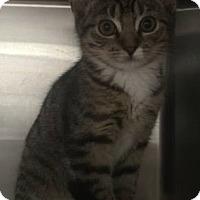 Adopt A Pet :: Bitsy - Gainesville, FL