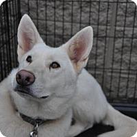 Adopt A Pet :: HOPE - Powder Springs, GA