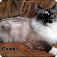 Adopt A Pet :: Connie - Portland, OR
