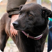 Adopt A Pet :: Kumba - Athens, GA