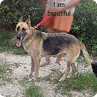 Adopt A Pet :: Missy - Citrus Springs, FL