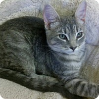 Adopt A Pet :: Fiona - Lake Charles, LA