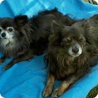 Adopt A Pet :: Bear and Beau - Lansing, MI