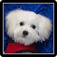 Adopt A Pet :: Jameson - San Diego, CA