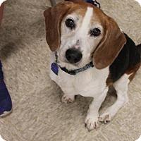 Adopt A Pet :: Rita - Fargo, ND