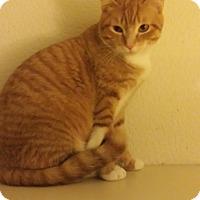Adopt A Pet :: Leopold - Mesa, AZ
