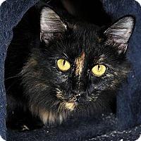 Adopt A Pet :: Heaven - Fort Leavenworth, KS