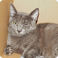 Adopt A Pet :: Mitch - Grants Pass, OR
