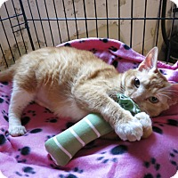 Adopt A Pet :: Freya - Geneseo, IL