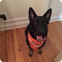 Adopt A Pet :: Raven - Morrisville, NC