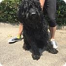Adopt A Pet :: Louie