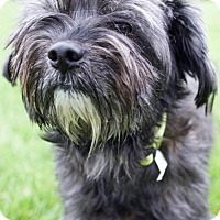 Adopt A Pet :: Hurley - Portland, OR