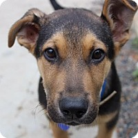 Adopt A Pet :: Bogart von Bottcher - Thousand Oaks, CA