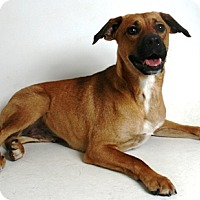 Adopt A Pet :: Angel - Redding, CA