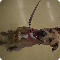 Adopt A Pet :: Bella - Ogden, UT