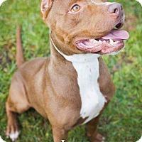 Adopt A Pet :: Indie - Darien, GA