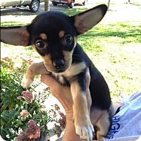 Adopt A Pet :: Bell - Ashville, OH