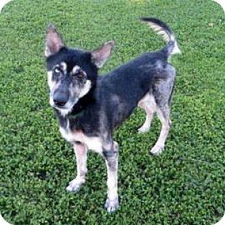 German Shepherd Dog/Husky Mix Dog for adoption in Janesville, Wisconsin - Lola