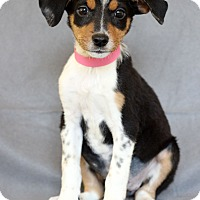 Adopt A Pet :: Brie - Waldorf, MD