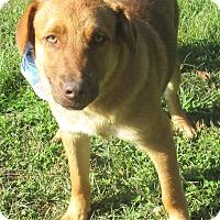 Adopt A Pet :: Professor - Reeds Spring, MO