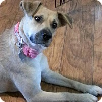 Adopt A Pet :: Majel - Hagerstown, MD
