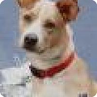 Adopt A Pet :: TODD - Tomball, TX