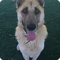 Adopt A Pet :: Seth - Chula Vista, CA