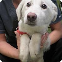 Adopt A Pet :: CHER - Cleveland, MS