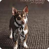 Adopt A Pet :: Ivy - Dallas, TX